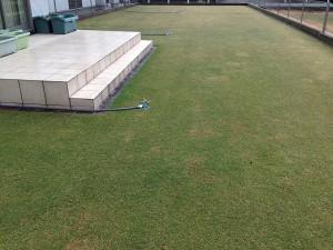 2016年4月8日の芝生。