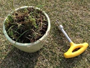 植木鉢に入れられた雑草と、抜けるんですミニ。