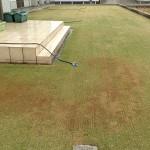 スプリンクラーが置かれた芝生。西側から撮影。