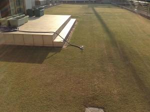 2016年4月12日の朝の芝生。西側から。