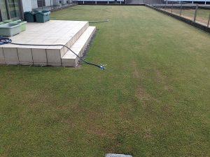 2016年4月14日の雨の芝生。西側から。