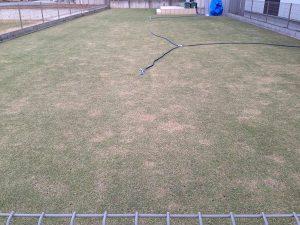 2016年4月15日の裏庭の芝生。東側から。
