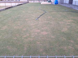 2016年4月16日の朝の裏庭の芝生。東側から撮影。