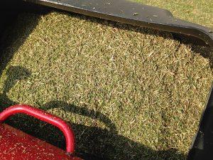 集草箱1杯の刈り芝。