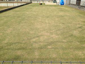 穂刈りの後の芝生。庭の奥にバロネスLM12MH。