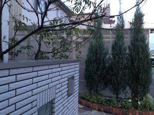 玄関前のコニファーとシマトネリコ。正面側から撮影。