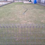 2016年4月18日の早朝の芝生。東側から撮影。