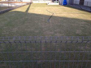 2016年4月18日の日の出の後の芝生。東側から撮影。