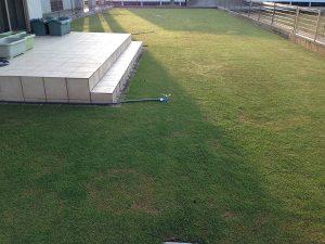 2016年4月27日の朝の芝生。西側から。
