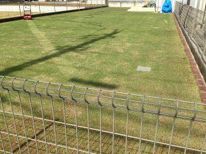 芝刈り。最初の1列。