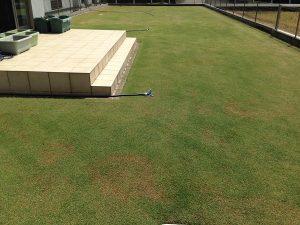 2016年4月30日の芝生。西側から。