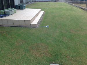 2016年5月1日、今朝の芝生。西側から。