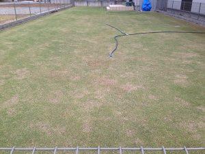 2016年5月1日、今朝の芝生。東側から。