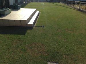 裏庭の芝生。西側から撮影。