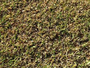 裏庭の芝生。まだ緑の薄いところの近接撮影。