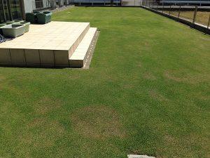 裏庭の芝生。西側から撮影。良い天気。