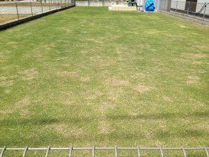 裏庭の芝生。東側から。良い天気。