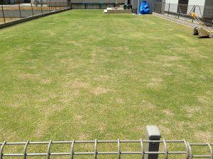 バーチカルカット(=根切り)の途中の芝生とリョービLM-2800。