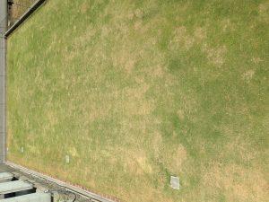 作業後の裏庭の芝生。2階のバルコニーから東側を撮影。