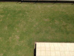 作業後の裏庭の芝生。2階のバルコニーから真下を撮影。