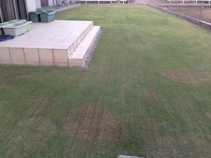 サッチング終了後の裏庭の芝生。西側から撮影。