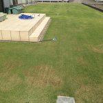 2016年5月8日の裏庭の芝生。西側から撮影。
