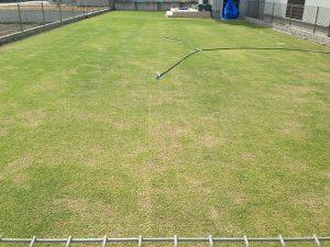 2016年5月8日の裏庭の芝生。東側から撮影。
