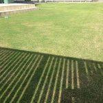 作業後の芝生。西側から。