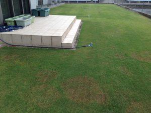 2016年5月9日の芝生。西側から撮影。