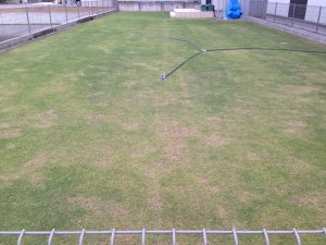 2016年5月9日の芝生。東側から撮影。