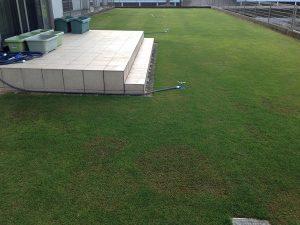 2016年5月12日の芝生。西側から撮影。