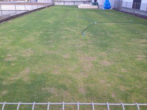 2016年5月12日の芝生。東側から撮影。