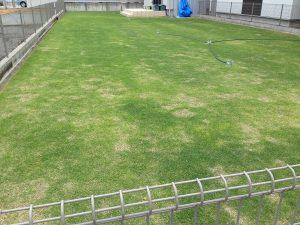 2016年5月14日の裏庭の芝生。芝刈り前。南東から撮影。
