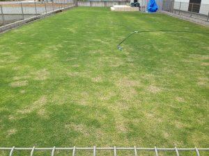 2016年5月14日の裏庭の芝生。東側から撮影。