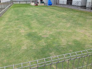 2016年5月14日の裏庭の芝生。芝刈り途中。南東から撮影。