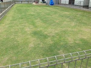 2016年5月14日の裏庭の芝生。芝刈り終了。南東から撮影。