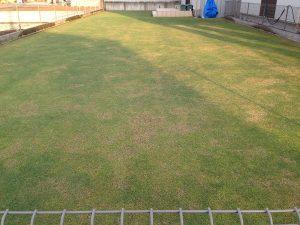 芝刈りの翌日、2016年5月15日の早朝の裏庭の芝生。東側から撮影。