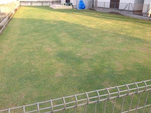 芝刈りの翌日、2016年5月15日の早朝の裏庭の芝生。北東側から撮影。