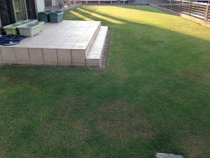 裏庭の芝生。西側から。