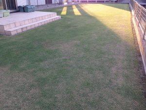 裏庭の芝生。南西から。