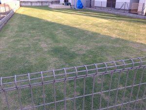 裏庭の芝生。北東から。