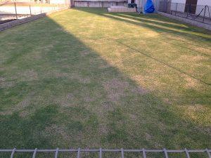 裏庭の芝生。東側から。