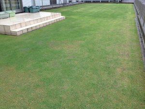 裏庭の芝生。南西から撮影。