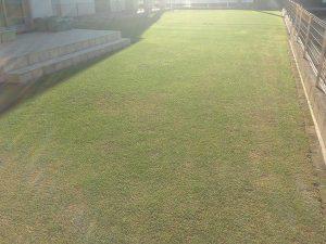 2016年5月18日の裏庭の芝生。南西から撮影。