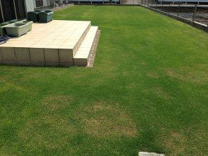 2016年5月21日の裏庭の芝生。西側から。