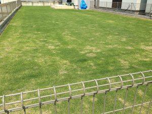 2016年5月21日の裏庭の芝生。南東から。