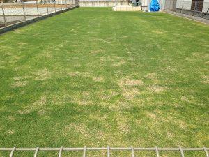 2016年5月21日の裏庭の芝生。東側から撮影。