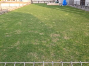2016年5月24日の裏庭の芝生。東側から撮影。