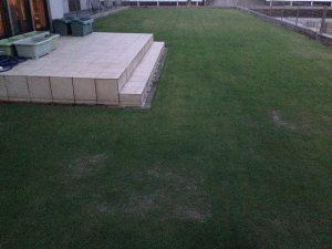 作業後の裏庭の芝生。西から。