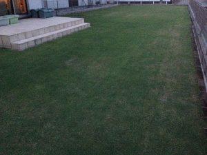 作業後の裏庭の芝生。南西から。